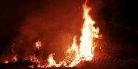 Alanya'da ağaçlık alanda yangın paniği