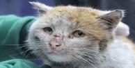 Depremzede kedi 'Toros' Antalya'da sıcak yuvasına kovuştu