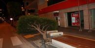 Fırtına ağacı kökünden söktü, taksilere zarar verdi