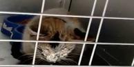 12 gün sonra enkazdan kurtarılan kedi için duygusal paylaşım!