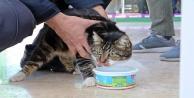 Garajda mahsur kalan kedinin 2 günlük esareti, dünya kediler gününde son buldu