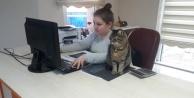 Sokaktan bulduğu kedilerini ofiste besliyor, çalışanlarını hayvan sevgisi olanlardan seçiyor