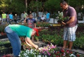Alanya Belediyesi ücretsiz çiçek dağıtıyor