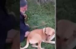 Yaşlı adam köpeğe tecavüz ederken yakalandı