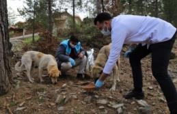 Alanya'da Sokak hayvanları güvende