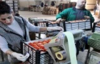 Tanzim satışa 4 günde bin 400 ton sebze