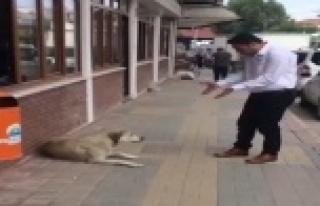 Belediye personelinin nezaketi, sokak köpeğini yerinden...