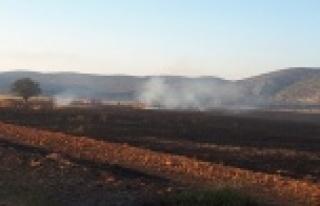 Kargalar 200 dekarlık anız ve ekin yangınına sebep...