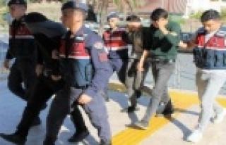 Alanya'da 30 bin liralık avokado çalan hırsızlar...