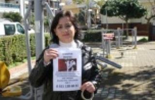Alanya'da kayıp kedisini bulana 1000 TL ödül...