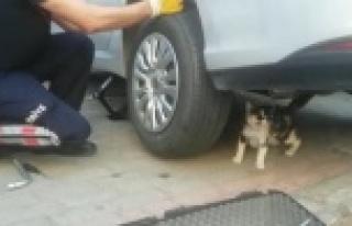 Anne kedi yavrusu kurtarılırken bir an olsun başından...