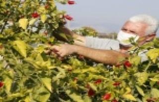 İlçeyi kendi ürettiği bitkilerle güzelleştiriyor