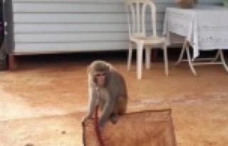 Evinde maymun ve keklik besleyen kişiye 2 bin 763...