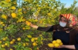 Kadın çiftçiler kısıtlamada da üretime devam...