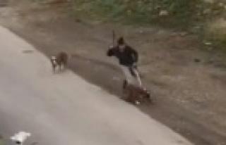 Sopayla köpeklerini döven kadınına ceza