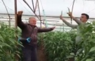 Yeşil biber fiyatındaki artış üreticiye çiftetelli...