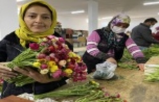 Cebinde getirdiği hediye tohumla Antalya'da üretime...