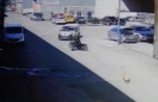 Köpekten korkan motosikletli otomobile çarptı:...