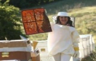 Sindirim sistemi için arı ekmeği önerisi
