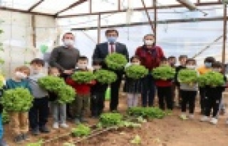 Minikler serada organik sebze yetiştiriyor