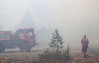 Alanya'da yayladaki orman yangınının bilançosu...
