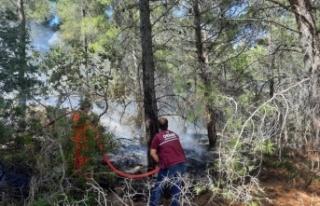 Domuz gelmesin diye yakıldığı iddia edilen ateş...