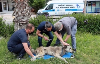Hayvan ambulansı ile anında müdahale