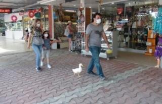 Ördekleriyle çarşı pazar geziyor, görenleri şaşkına...