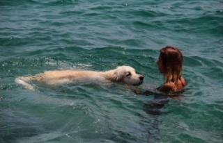 Rus turist, 9 bin kilometrelik yoldan getirdiği köpeğiyle...