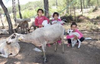 Yılda 6 ayrı yer değiştiren çobanlar göç etmeye...
