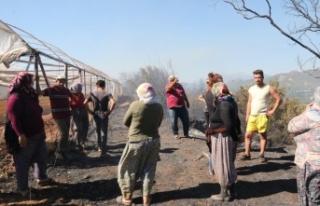 Antalya'daki arazi yangınında seraların naylon...