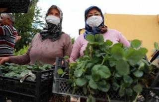 Çiftçilere organik tarım eğitimi verildi, çilek...
