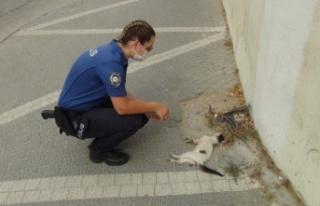 Kadın polis, bir aracın çarpıp kaçtığı yavru...