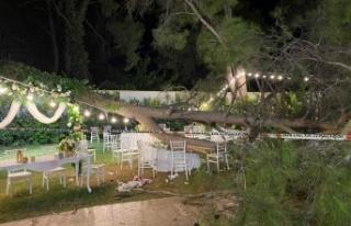 Antalya'da düğün sırasında ağaç devrildi:...