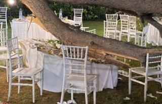 Antalya'da kır düğününde ağaç devrildi:...