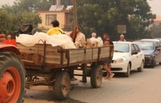 Hayvanlarını yangından traktöre yükleyerek kaçırdılar