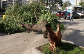 Alanya'da fırtına ağacı devirdi, araç altında...