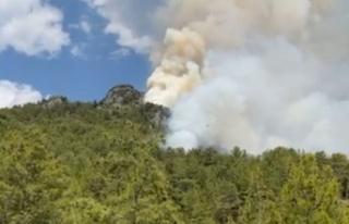Alanya'da yine orman yangını başladı