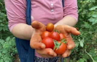 Meyvede 1 yılda miktar düştü fiyat yüzde 108...