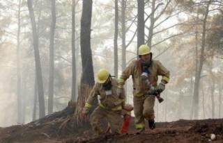 Orman Genel Müdürü Karacabey yangınlara ilişkin...