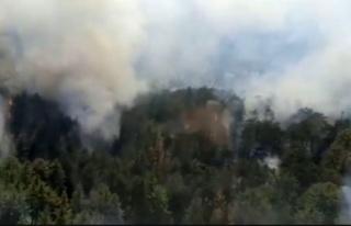 Orman yangını yeniden başladı