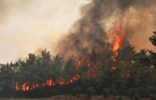Orman yangınlarıyla boğuşan vatandaşa sevindirici...