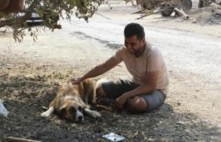 Yangında kaybolan köpeği 4 gün sonra geri geldi,...