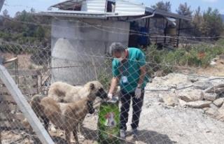 Yangından etkilenen sokak hayvanlarına Alanya Belediyesi'nden...