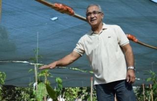 Emekli okul müdüründen tropikal meyve bahçesi