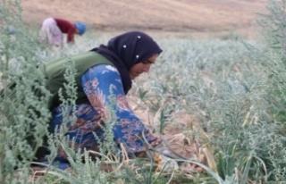 Tarımda çalışanlara su içmeleri tavsiyesi