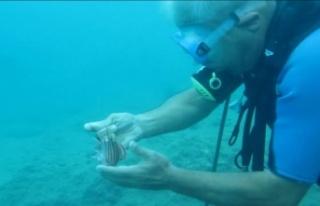 Mahsur kalan naylon balığına profesör eliyle özgürlük