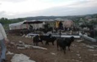Tarsus'ta Hayvan Hırsızlarına Operasyon