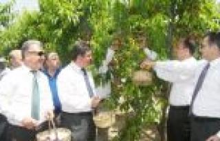 Tarsus'ta 'nektarin-şeftali Hasat Günü' Etkinliği...