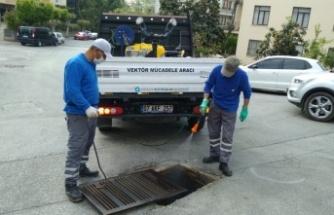 Alanya'da sinekle mücadele başladı
